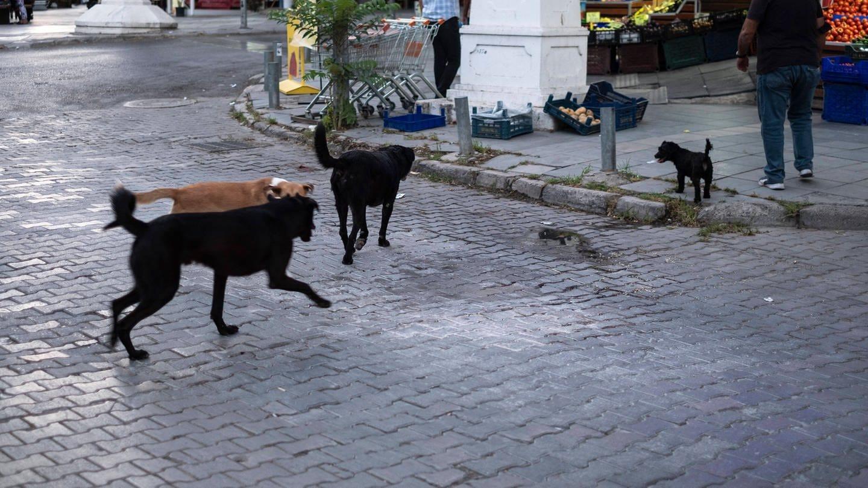 Gruppe Straßenhunde: Wie verhalte ich mich streunenden Hunden gegenüber?