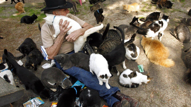 Animal hoarding Katzen (Foto: Imago, imago images / ZUMA Press)