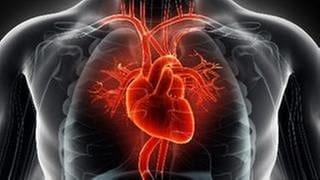 Grafische Darstellung Brustkorb mit Herz (Foto: Getty Images, Thinkstock -)