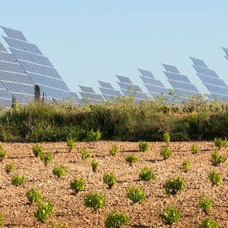 Solaranlagen auf Feld (Foto: Getty Images, Thinkstock -)