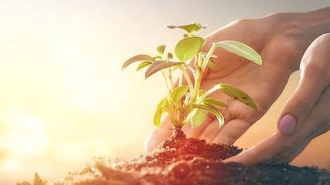 Knospe einer Pflanze in einer Hand (Foto: Getty Images, Getty Images - Choreograph)