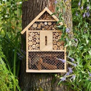 Ein kleines Insektenhotel hängt an einem Baumstamm neben einem Strauch und Blüten. (Foto: Getty Images, Getty Images -)