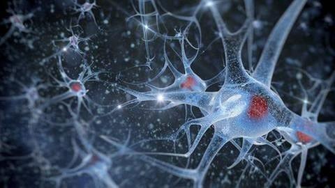 Neuronen und Verbindungen (Foto: Getty Images, Thinkstock -)