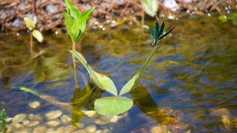 Wasserschatz: So wertvoll ist sauberes Grundwasser! (Foto: Colourbox)