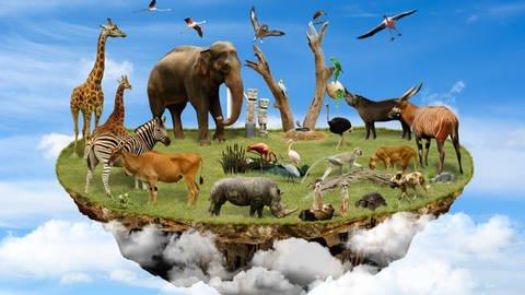 Zoo – Gefängnis oder Arche?  (Foto: Colourbox)