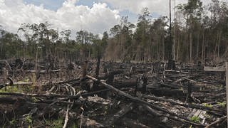 Gerodeter Wald in Indonesien (Foto: picture-alliance / Reportdienste, picture alliance/imageBROKER)